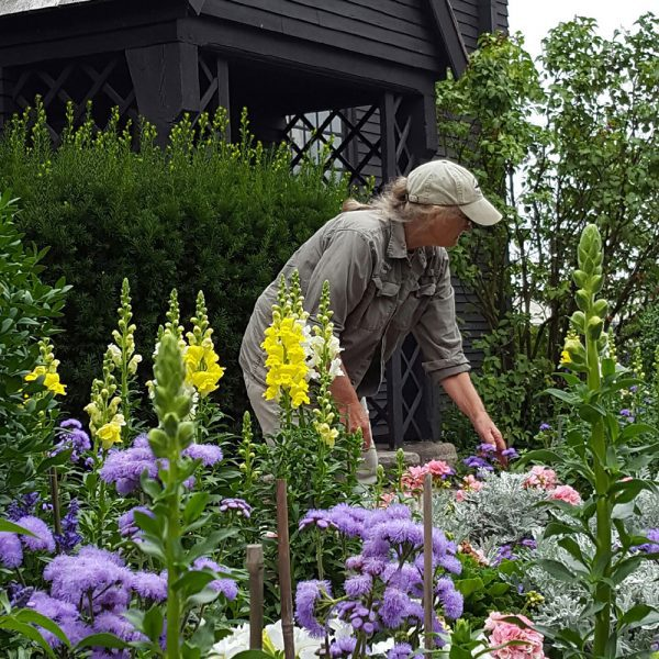 Kanter Design Associates maintaining the historic gardens outside of the House of the Seven Gables.