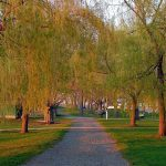 Salem Willows