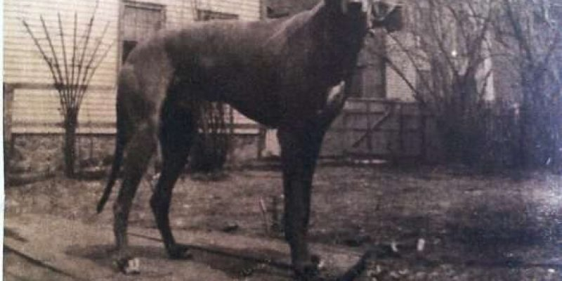 photograph of a large black dog